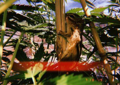 High 95 Photo Contest www.high95.com