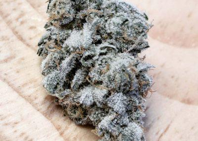 High 95 Cannabis Cup