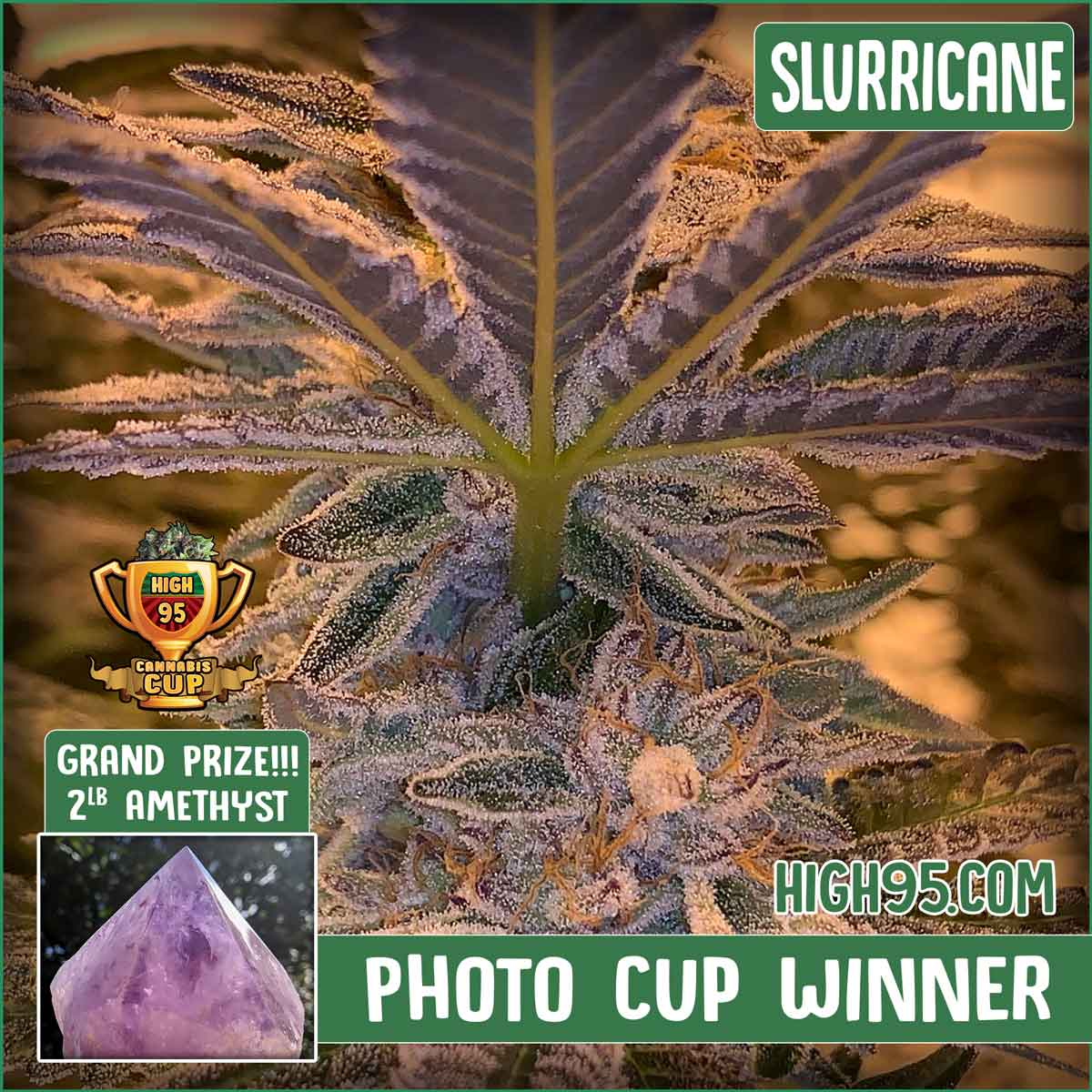 High 95 Photo Cup Winner!